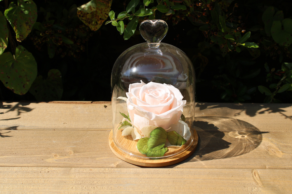 Roses in a Glass Dome